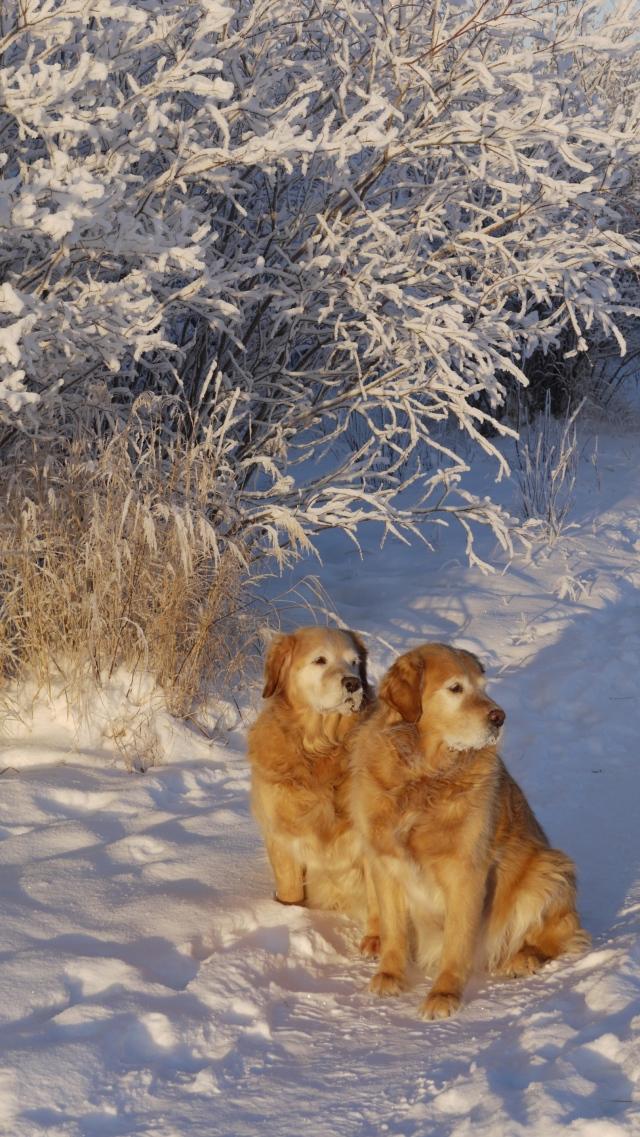 Two Cute Companions