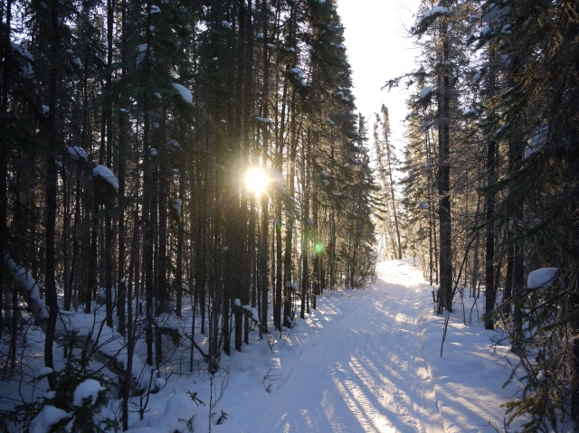 Ski Trail with Sunlight
