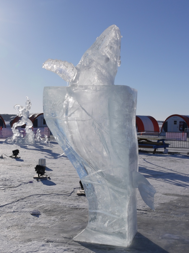ice whale emerging from ice water